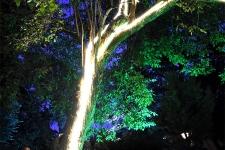 Дървото през нощта